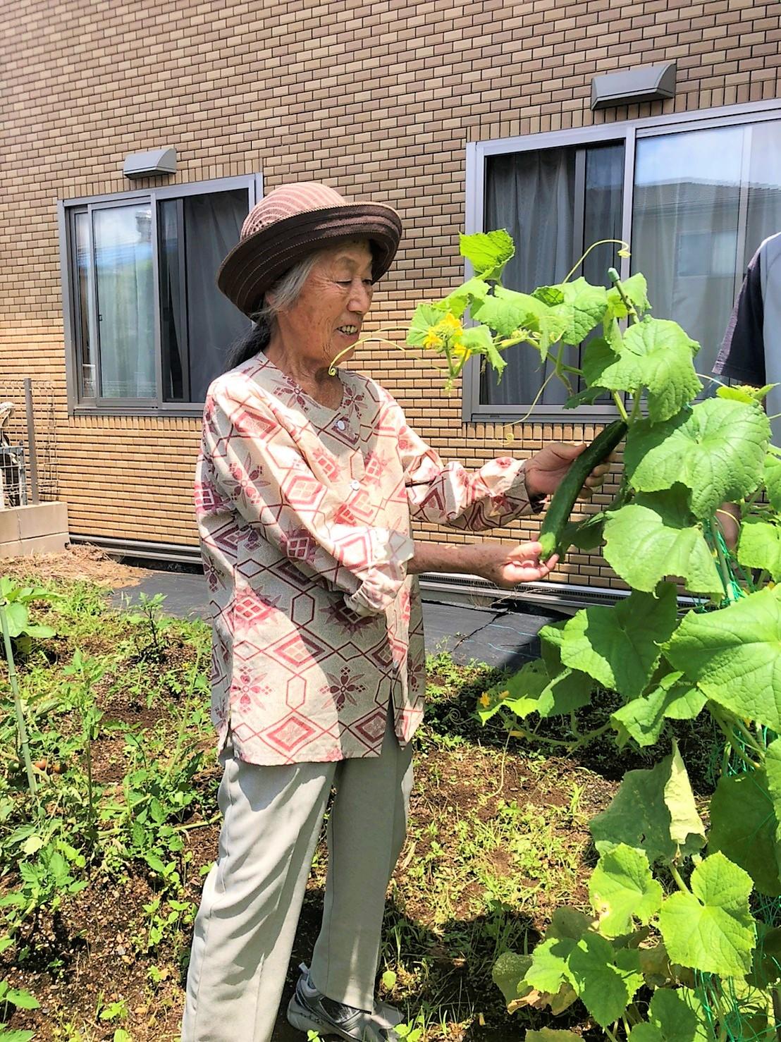 野菜収穫!